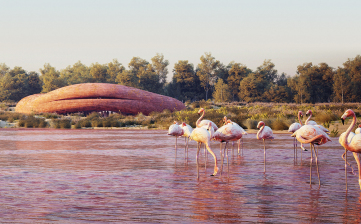 Abu Dhabi Flamingo Visitor Center