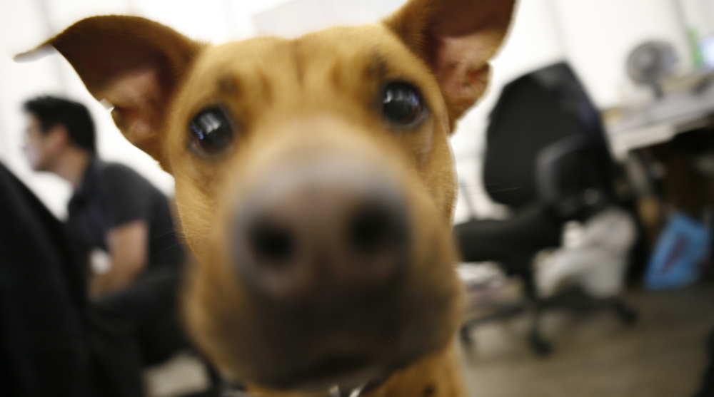 coworking, coworking spaces, pets at work, leisurely workplace